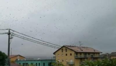 La meraviglia della migrazione degli uccelli (2)