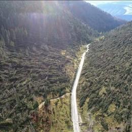 I boschi devastati dal maltempo A Bergamo gli alberi della solidarietà