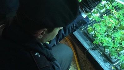 Super serra di marijuana in casa Arrestato 58enne nel Sebino