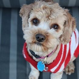 Botti di Capodanno, incubo per i cani Ecco come aiutare i nostri amici animali