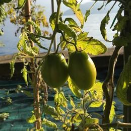 Caldo anomalo: germogli e frutti La falsa primavera inganna le piante