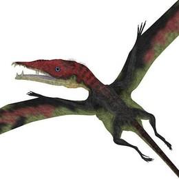 Città Alta, il Museo Caffi si rifà il look Dinosauro nel logo, aspettando la mostra