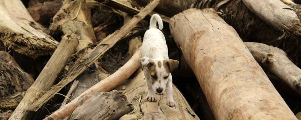 Cane ucciso barbaramente in Sicilia Era stato curato da onlus di Bergamo