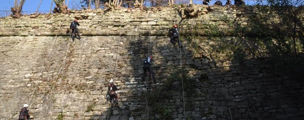 Città Alta, rocciatori acrobati al lavoro Tornano a splendere le Mura dimenticate