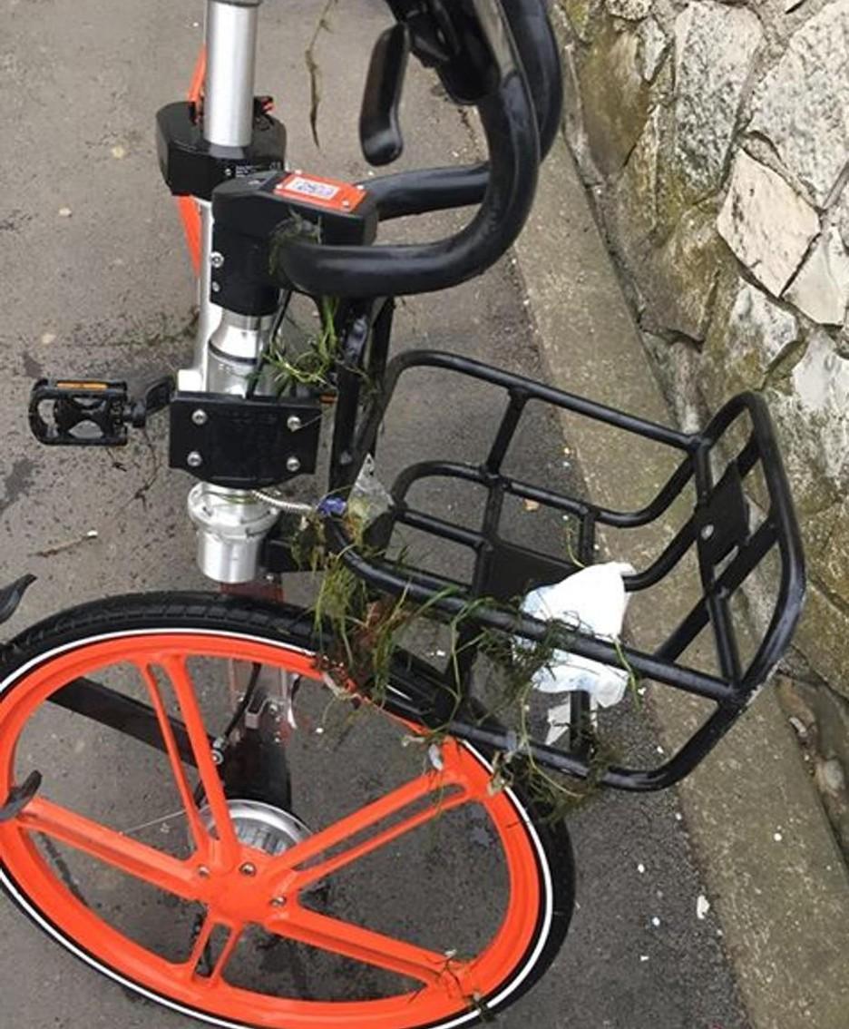 Alghe sulla bici recuperata