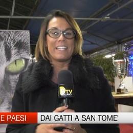 Gente e Paesi con gatti, pietre coti e San Tomè