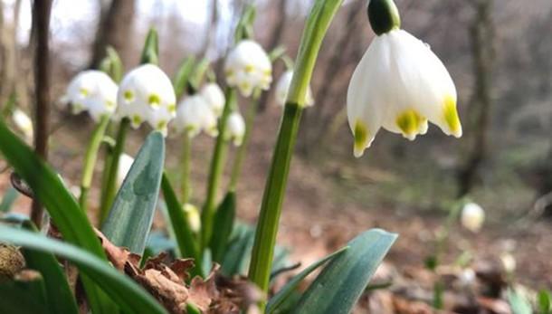 Primavera alle porte