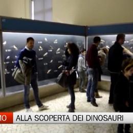 Museo Caffi - Un viaggio nel mondo dei dinosauri