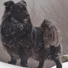 Meteo, settimana molto fredda Si alterneranno sole e neve (in pianura)