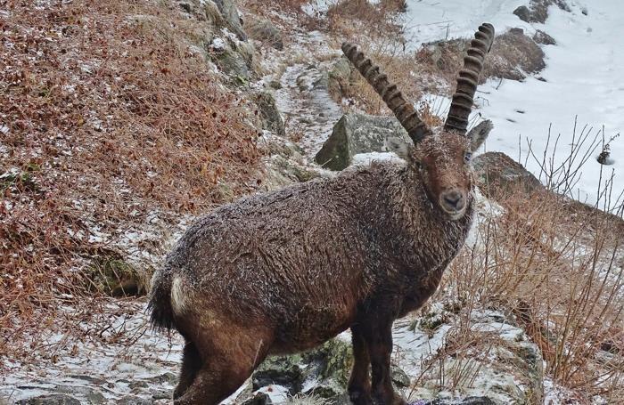 Gli animali ai -6 di Maslana sotto la nevicata. La neve, trascinata dal vento, è attecchita su tutte le piante