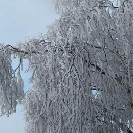 «Sculture di ghiaccio e neve...»