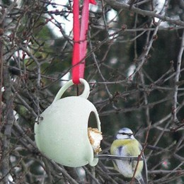 Ecco come aiutare gli uccellini al gelo «Sul davanzale briciole, ma non di pane»