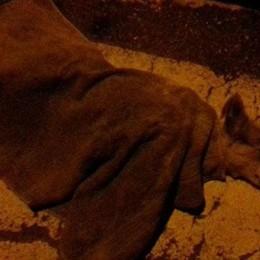 Scanzo, giallo sulla morte di un cane  Sarà l'autopsia a chiarire la causa