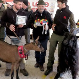 Ardesio, in migliaia alla fiera delle capre Vincono Rambo e Clarissa - Foto
