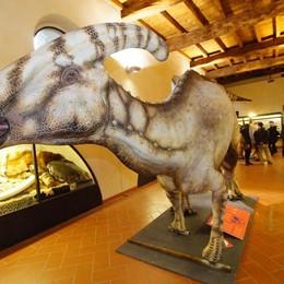 Tutti pazzi per dino: gli appuntamenti Al Caffi 2.100 visitatori in due giorni