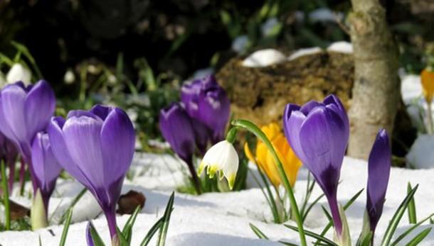 «La primavera mette gli sci...»
