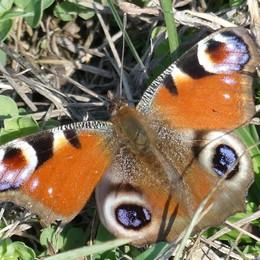 «Farfalla fuori stagione...»