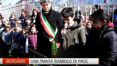 Bergamo - Una pianta simbolo di pace