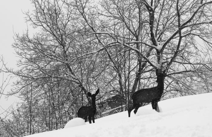 I cerbiatti (quasi veri) dei ragazzi della comunità di Valpiana