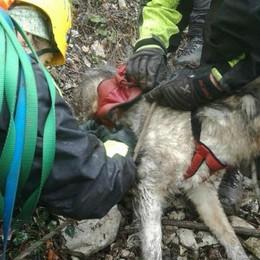 Cane prigioniero su uno sperone Task force per salvarlo a Sarnico