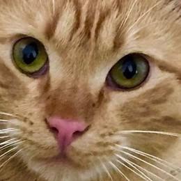 Gattino sparito e maltrattato? A Sarnico giallo con video e denuncia