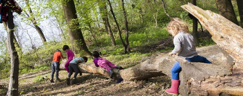 A Valbrembo c'è l'asilo nel bosco Si gioca con i legnetti e si dorme in amaca