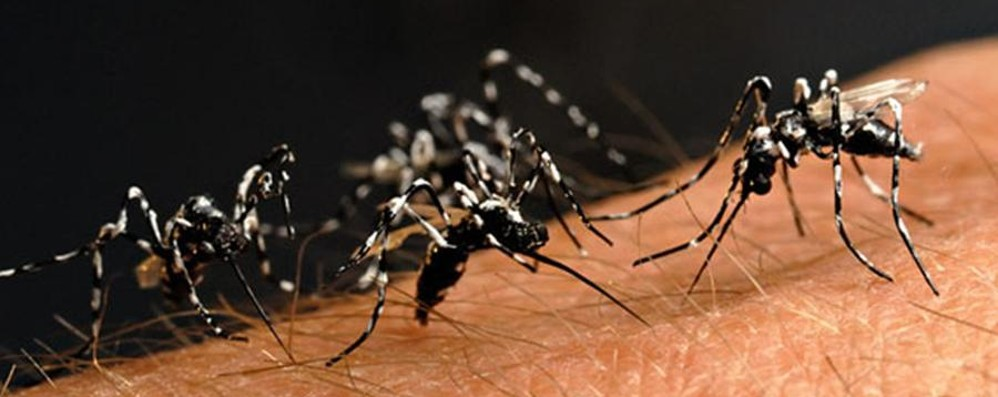 Azioni e consigli contro la zanzara tigre  Ecco gli obblighi per i cittadini