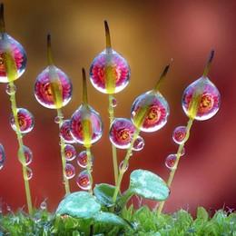 Gorle, è festa dei fiori: torna Floreka Natura e donne che si raccontano