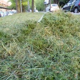 Dopo l'erba alta, ora il taglio malfatto Federconsumatori: non c'è limite