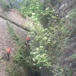Lavori di primavera in Città Alta Si puliscono le Mura - Il video