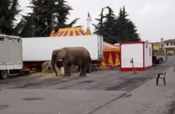 Baby del circo Dylan in un fotogramma tratto da un video in Fb