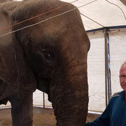 Baby esce dal recinto e sfiora un furgone Elefante scappa dal circo a Badalasco