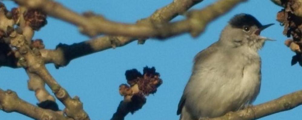 Un raggio di sole e scoppia la primavera Le tue foto dei prati e degli alberi in fiore