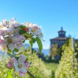 «Aprile dolce fiorire» colora la Val di Non