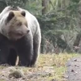 A tu per tu con l'orso: vai tu o vado io? Un 19enne incontra M18 - Il video