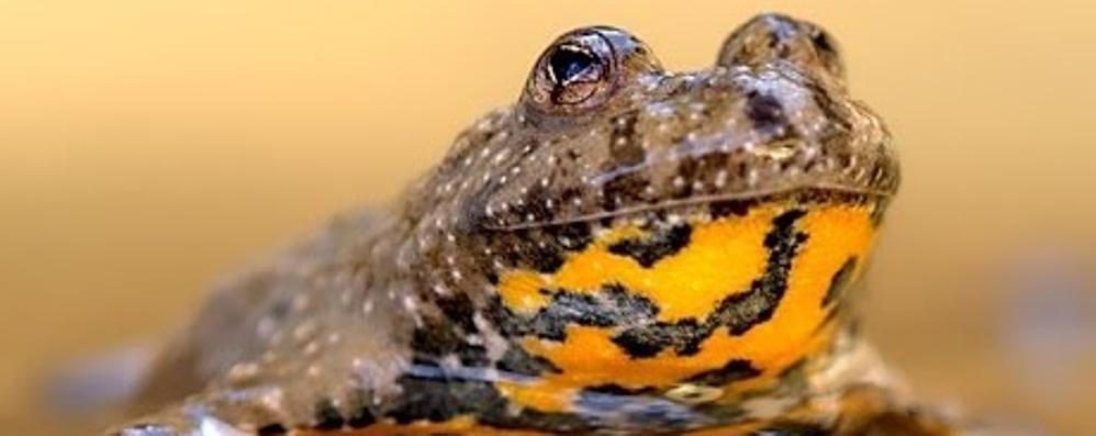 Nuove oasi nel Parco dei Colli Le specie (rare) che saranno salvate-Foto