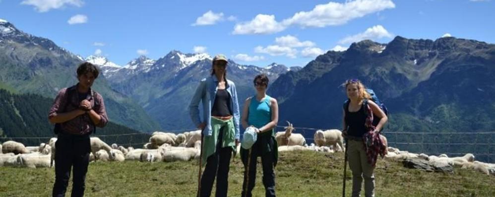 Un'estate insieme ai pastori? Si può fare, ecco come andare in quota