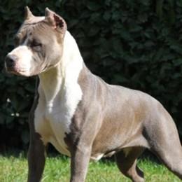 Cane aggredisce e uccide un altro cane Paladina, ferita anche la padrona