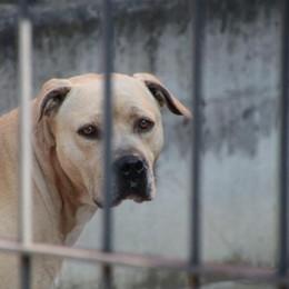 Meticcio sbranato a Paladina I proprietari dell'altro cane: costernati