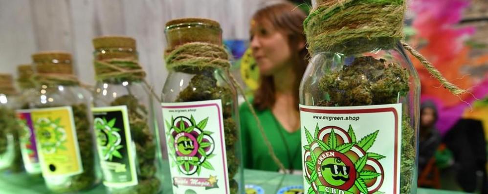 È inutile illudersi La cannabis fa male