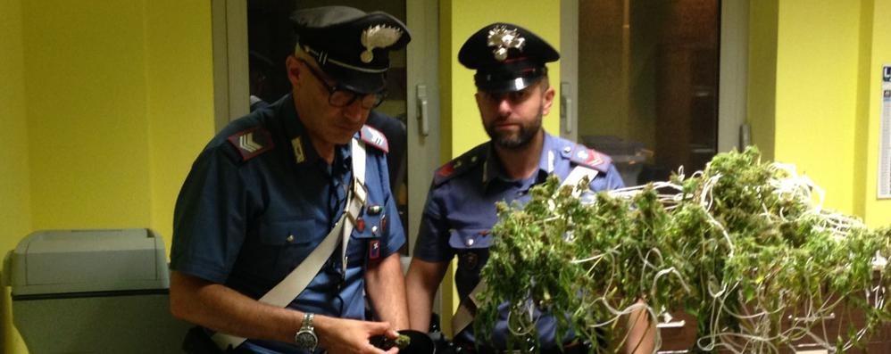 Calcio, serra di marijuana in casa Arrestato 21enne incensurato