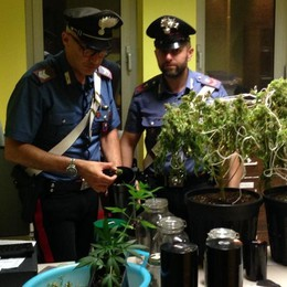 Calcio, serra di marijuana in casa Arrestato 21enne incensurato
