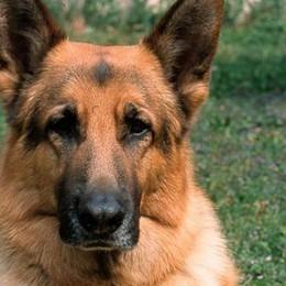 Corna Imagna, Paolino è salvo grazie al fiuto del cane Jago
