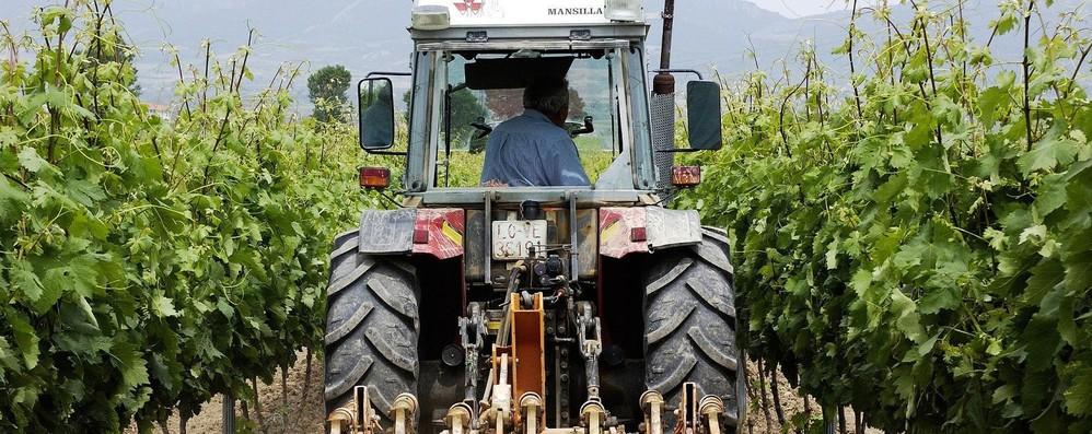 Ecco la nuova riforma Ue della politica agricola comune