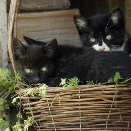 Gattile aperto per i più piccini