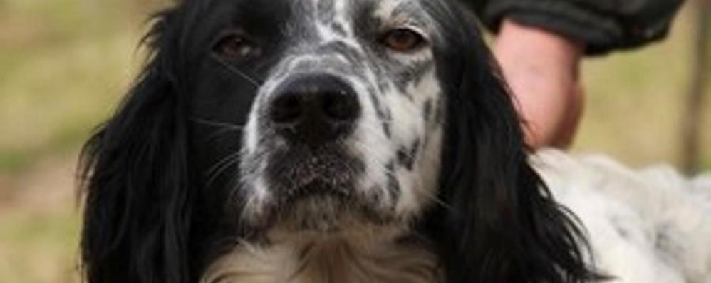 Anche i cani  soffrono di stress?
