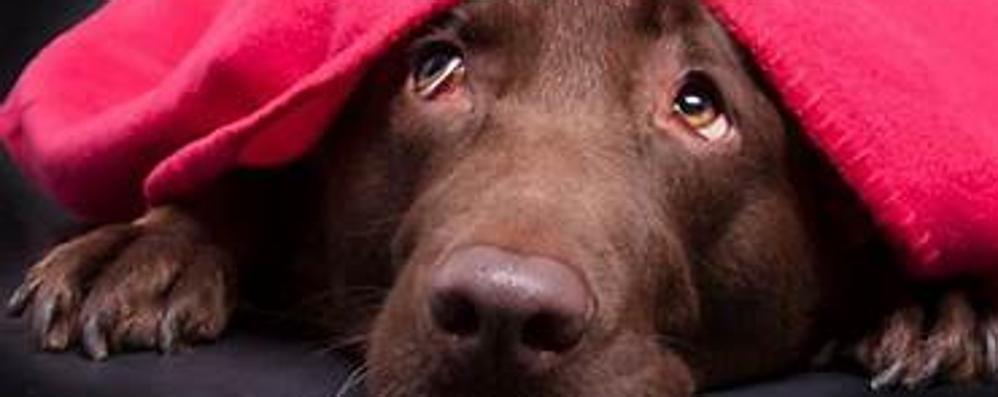 I cani e l'incubo dei botti di Capodanno Piccola guida per la (loro) sopravvivenza