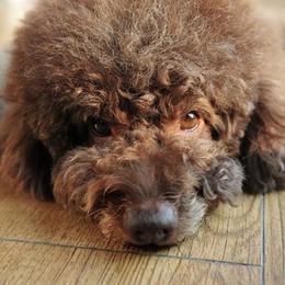 Il cane come un bimbo Attenti alle conseguenze