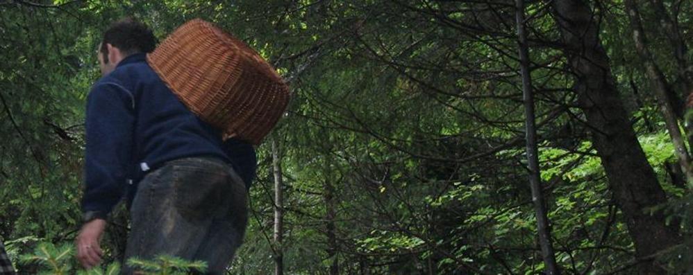 Va a cercare funghi in Valcanale 63enne disperso: torna il giorno dopo