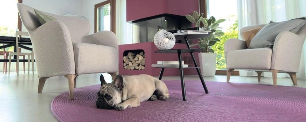 È il bulldogue francese il cane più trendy D'estate va protetto da caldo e umidità